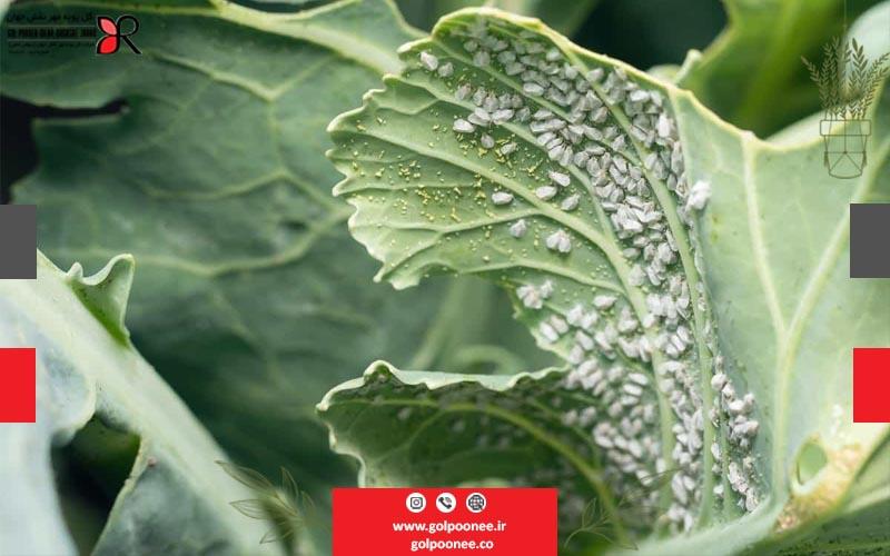 انواع آفات گیاهی