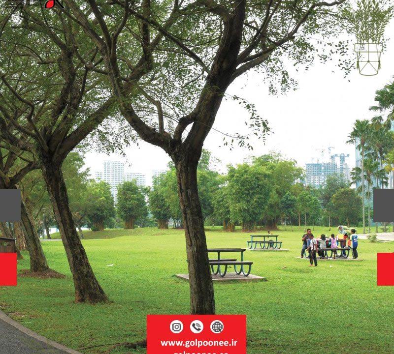 فضای سبز پارک